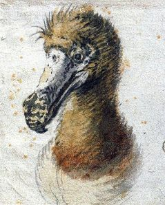 Last original depiction of a dodo before their extinction, by Cornelis Saftleven, 1638